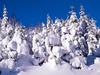 Snow Covered Trees Image