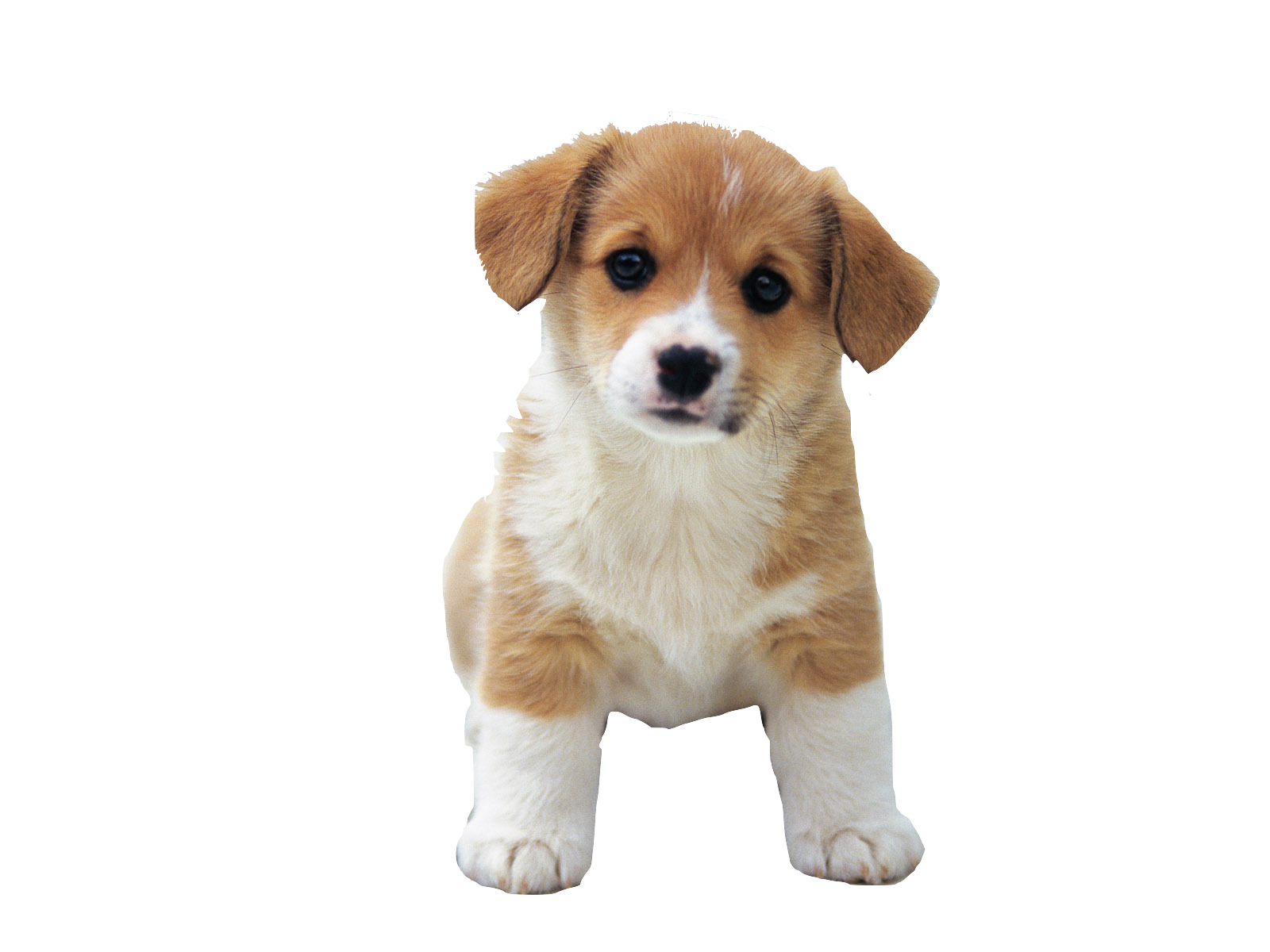 So Cute Puppies | Free Images at Clker.com - vector clip art online ...