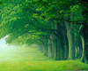 Forest Trees Clipart Image