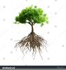 Tree Root Clipart Image