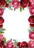 Free Pink Rose Clipart And Boarders Image
