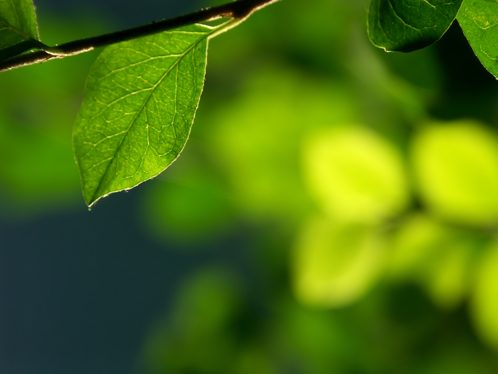 leaf in front of blur x free images at clkercom