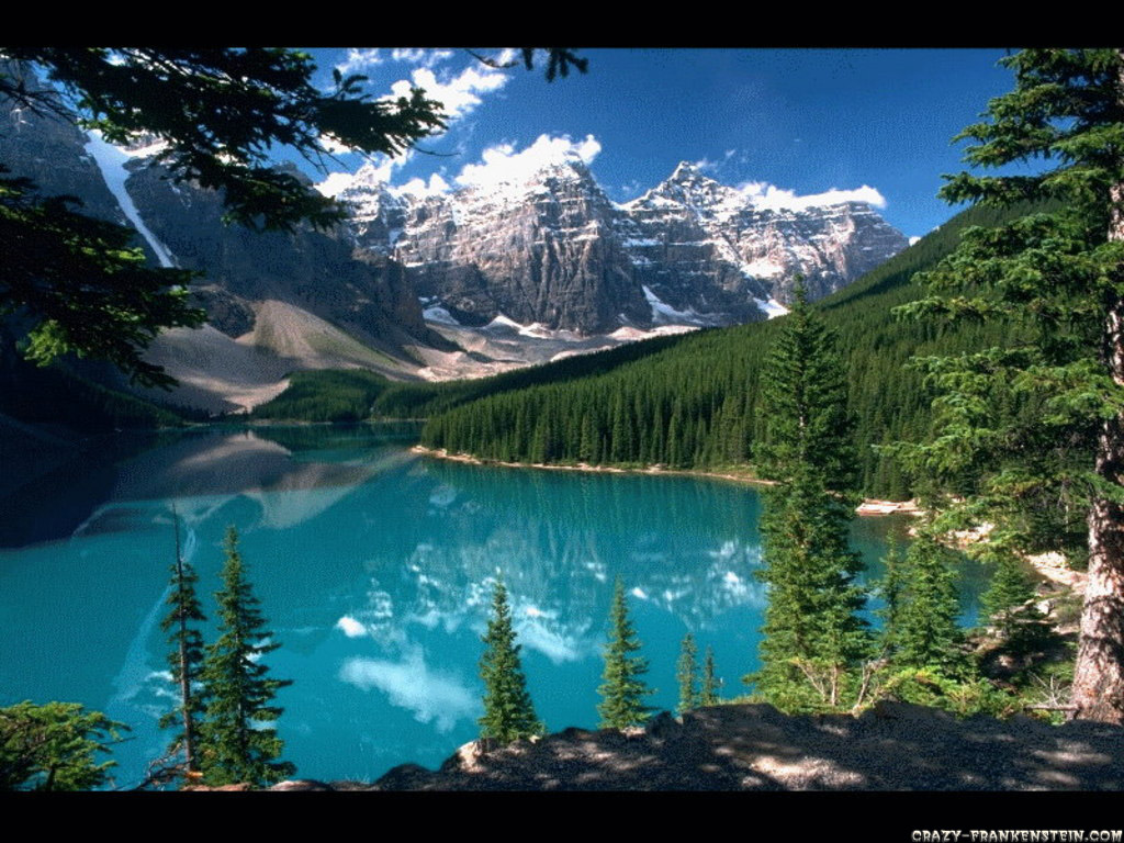 beautiful forest wallpaper free images at