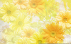 Flower Clipart Background Image