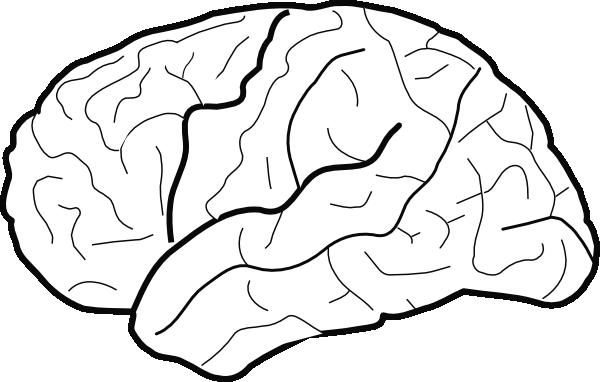 White Brain Clip Art at Clker.com - vector clip art online ...