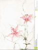 Free Pink Lily Clipart Image