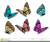 Colourful Butterflies Clipart Image