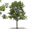 Psd Clipart Plants Trees Bushes Image