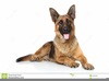 Free Clipart Of German Shepherds Image
