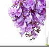 Thank You With Flowers Clipart Image