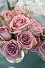 Dusty Pink Roses Image