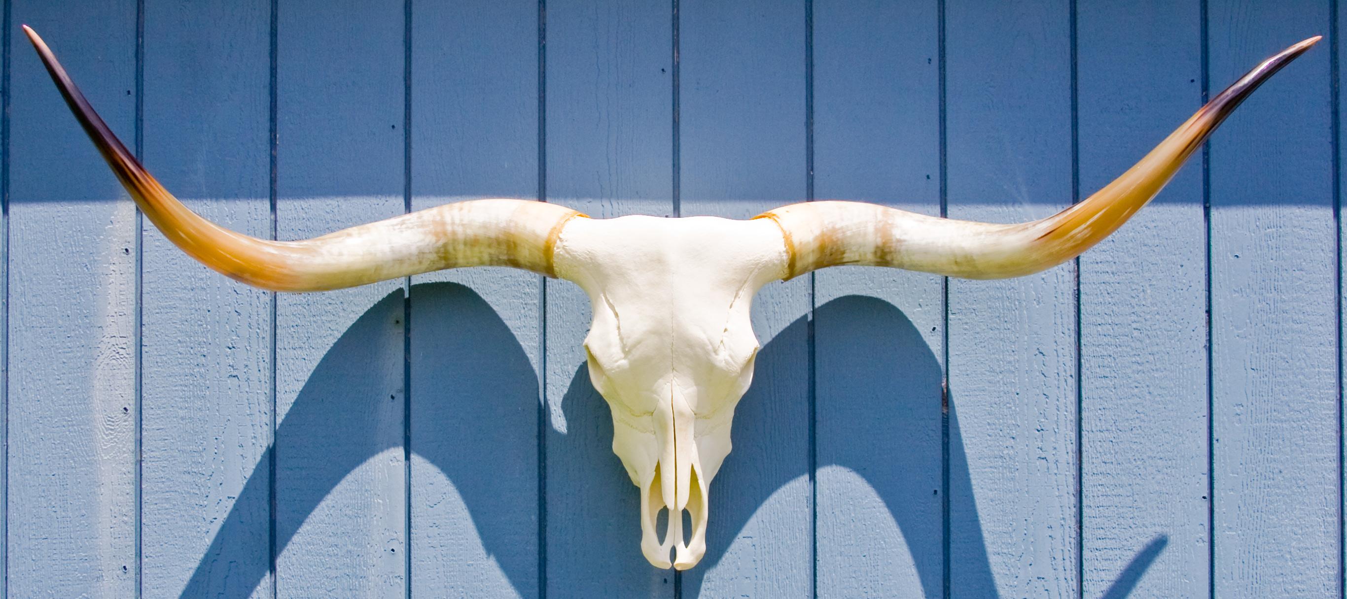 Longhorn Skull Silhouette Skull image - vector clip art Longhorn Skull ...