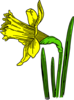 Single Daffodil Clip Art