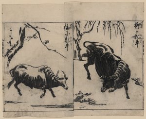 Two Oxen, One Under A Willow Tree And One Under A Plum Tree Image