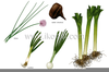 Bulb Plants Examples Image
