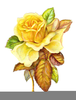 Free Yellow Roses Clipart Image
