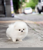 Fluffy Baby Animals Image