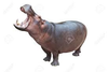 Hippo Photo Image