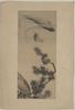 Koi Under A Pine Branch. Image