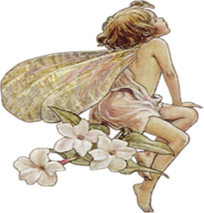 Fantasy Fairy Boy Flowers Image