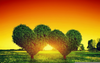Heart Tree Sunset Image