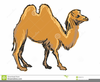 Camel Clipart Free Image