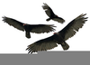 Clipart Of Vultures Free Image