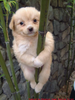 Cute Dog Panda Image