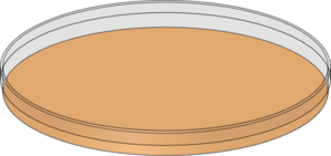 Orange Petri Dish Clip Art