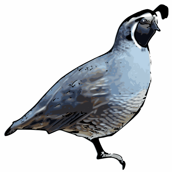 Line Drawing Quail : California quail clip art at clker vector