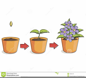 Plants Growing Clipart Image