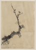 [fruit Tree Branch With Blossoms] Image