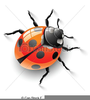 Ladybird Clipart Free Image