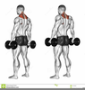 Hammer Curl Barbell Image