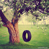Tire Swing Photography Image