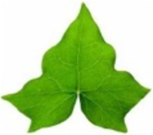 Ivy Leaf | Free Images at Clker.com - vector clip art online, royalty ...