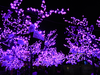 Purple Lights On Trees At Richmond Night Market Image