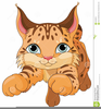 Clipart Of Bobcat Face Image