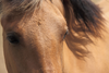 Eyes Of A Brown Horse Fyd Image