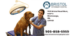 Hours Emergency Animal Hospital Mississauga Image