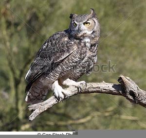 Owl Feet Clipart | Free Images at Clker.com - vector clip ...
