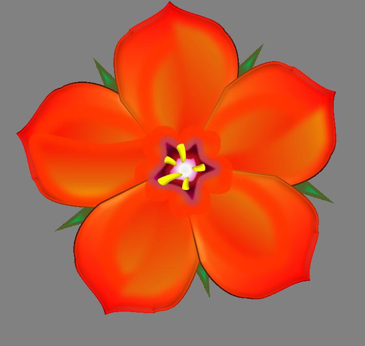 Scarlet Pimpernel | Free Images at Clker.com - vector clip ...