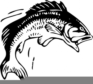 Free Bass Fish Clipart Image