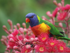 Colorful Birds Names Image