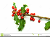 Holly Berry Clipart Image