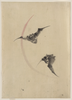 [two Bats Flying] Image