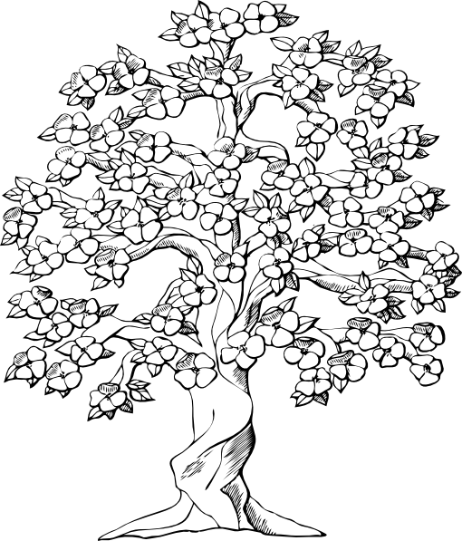 blossom tree colouring pages - Cherry Blossom Tree Coloring Pages