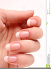 Hand Manicure Clipart Image