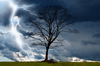 Tree And Storm Image