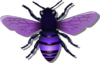 Bee Purple Image